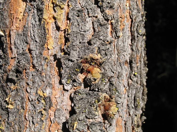 Lumber Mills That Buy Trees